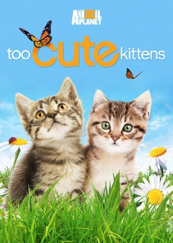 Too Cute Kittens Too Cute Kittens Pg