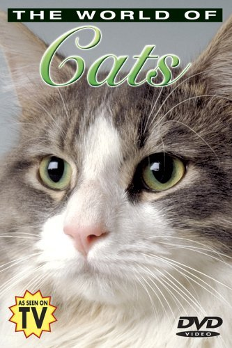 Understanding Your Cat World Of Cats Clr Nr