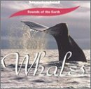 Sounds Of The Earth Whales Sounds Of The Earth