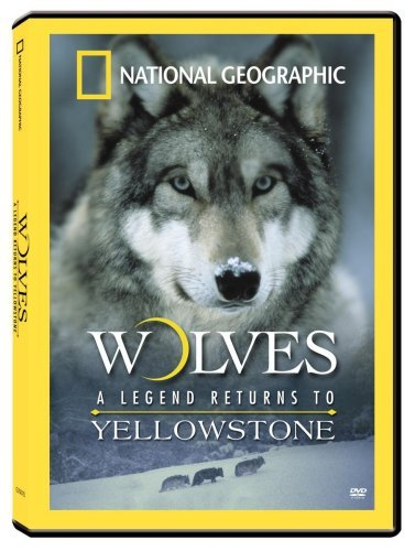 Wolves Legend Returns To Yello National Geographic Nr