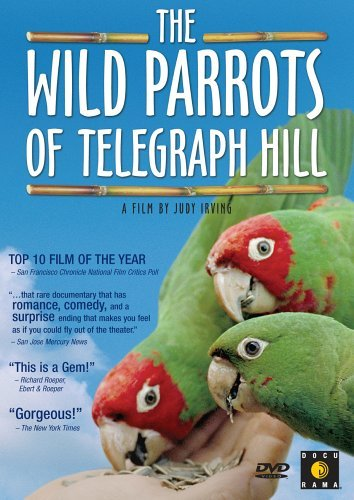 Wild Parrots Of Telegraph Hill Wild Parrots Of Telegraph Hill Nr