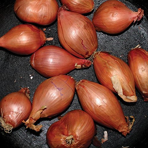 Ty Segall Fried Shallots