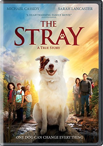 The Stray Lancaster Cassidy DVD Pg