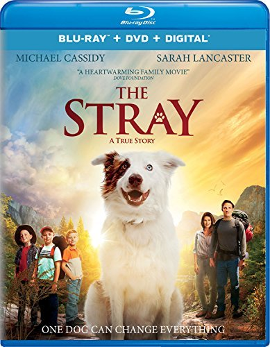 The Stray Lancaster Cassidy Blu Ray DVD Dc Pg