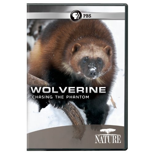 Wolverine Chasing The Phantom Nature Ws Nr