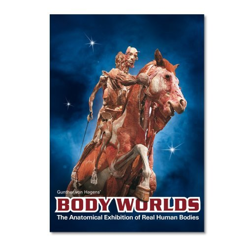 Body Worlds Anatomical Exhibition Of Real Hum