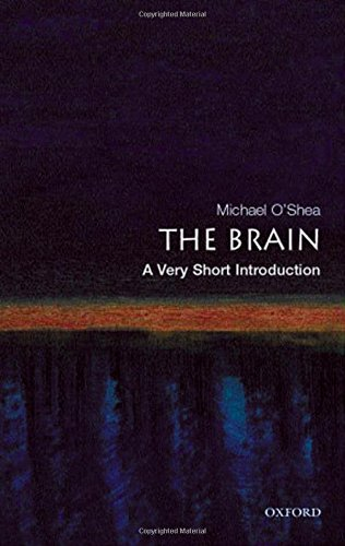 Michael O'shea The Brain A Very Short Introduction