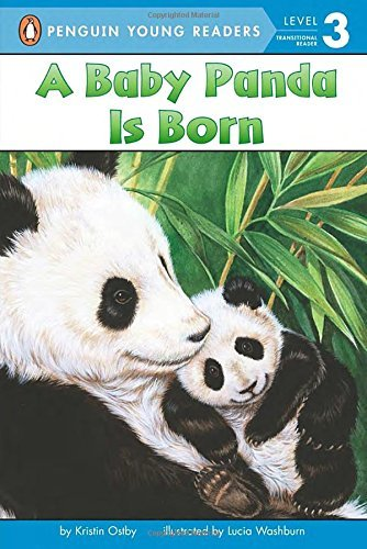 Kristin Ostby A Baby Panda Is Born