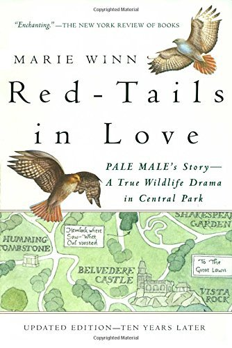Marie Winn Red Tails In Love Pale Male's Story A True Wildlife Drama In Centr