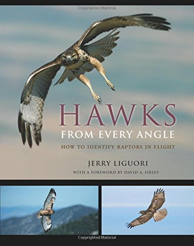 Jerry Liguori Hawks From Every Angle How To Identify Raptors In Flight