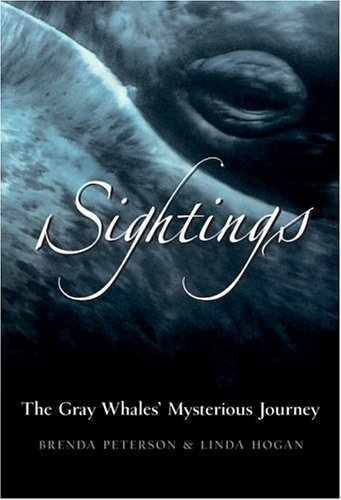 Brenda Peterson Sightings The Gray Whales' Mysterious Journey