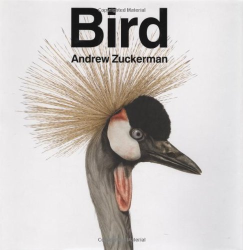 Andrew Zuckerman Bird