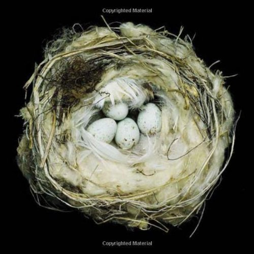 Sharon Beals Nests Fifty Nests And The Birds That Built Them