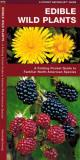 James Kavanagh Edible Wild Plants A Folding Pocket Guide To Familiar North American