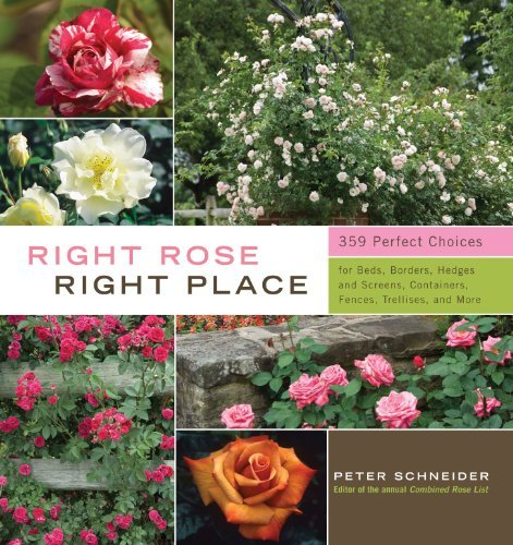 Peter Schneider Right Rose Right Place 359 Perfect Choices For Beds Borders Hedges And