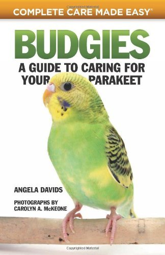 Angela Davids Budgies A Guide To Caring For Your Parakeet