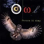 Owl Frozen In Time