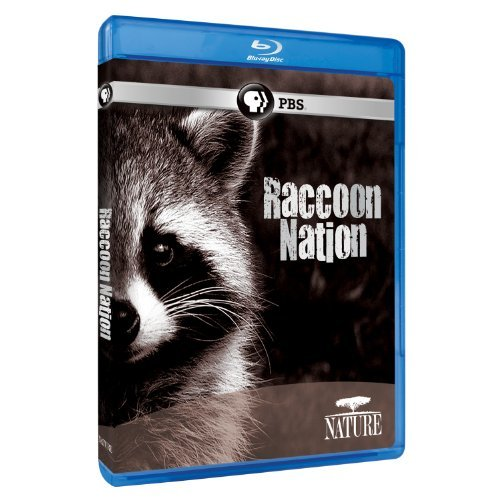 Raccoon Nation Nature Blu Ray Ws Nr