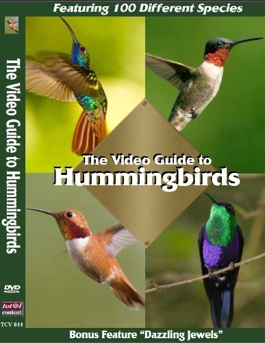 Video Guide To Hummingbirds Video Guide To Hummingbirds Nr