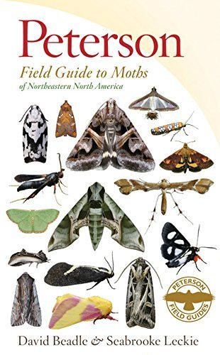 David Beadle Peterson Field Guide To Moths Of Northeastern Nort