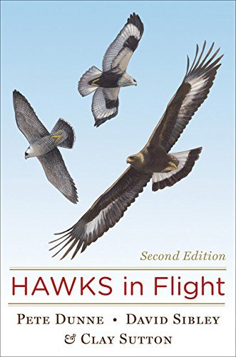 David Sibley Hawks In Flight 0002 Edition;