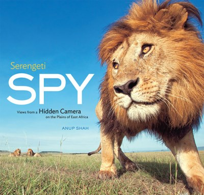 Anup Shah Serengeti Spy Views From A Hidden Camera On The Plains Of East