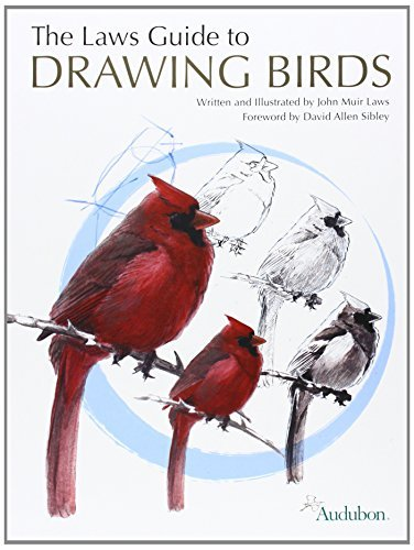 John Muir Laws The Laws Guide To Drawing Birds
