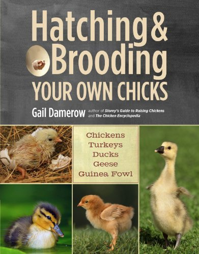 Gail Damerow Hatching & Brooding Your Own Chicks Chickens Turkeys Ducks Geese Guinea Fowl