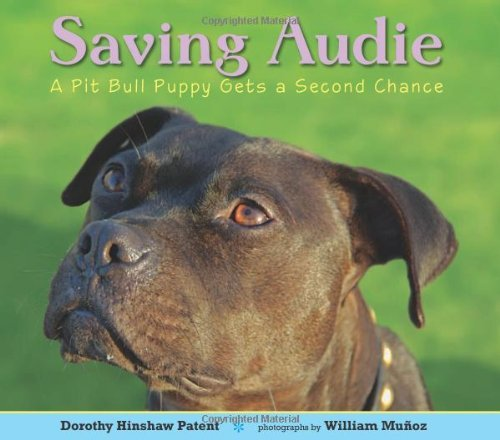 Dorothy Hinshaw Patent Saving Audie A Pit Bull Puppy Gets A Second Chance
