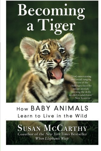 Susan Mccarthy Becoming A Tiger How Baby Animals Learn To Live In The Wild