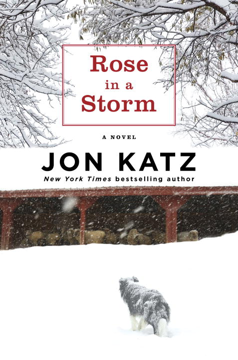 Jon Katz Rose In A Storm