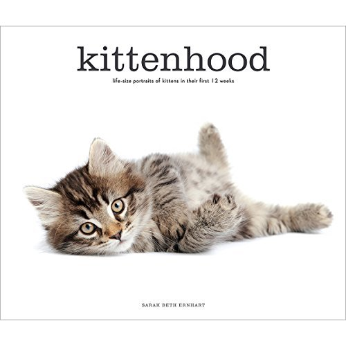 Sarah Beth Ernhart Kittenhood Life Size Portraits Of Kittens In Their First 12