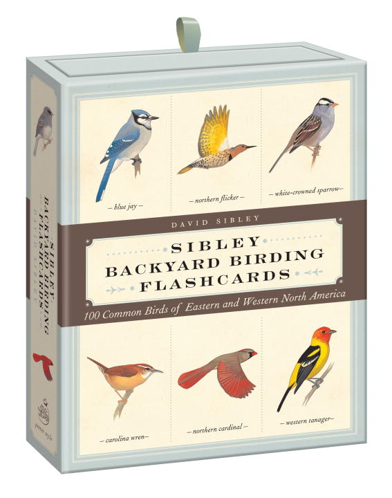 David Allen Sibley Sibley Backyard Birding Flashcards 100 Common Birds Of Eastern And Western North Ame