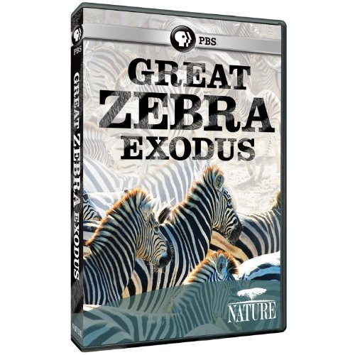 Great Zebra Exodus Nature Nr