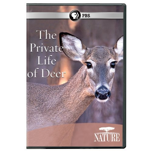 Private Life Of Deer Nature Nr