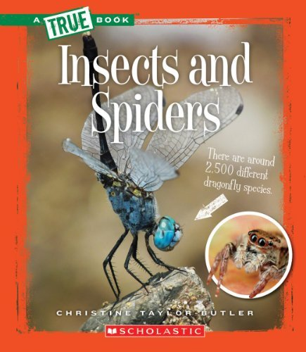 Christine Taylor Butler Insects And Spiders