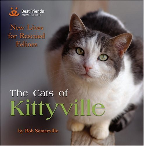 Bob Somerville The Cats Of Kittyville New Lives For Rescued Felines