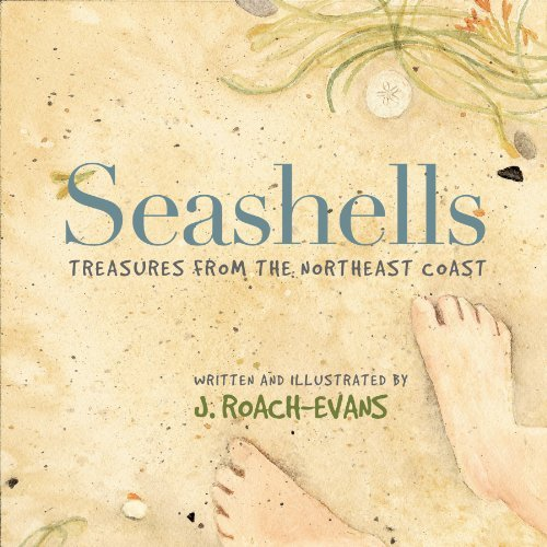 Joanne Roach Evans Seashells Treasures From The Northeast Coast