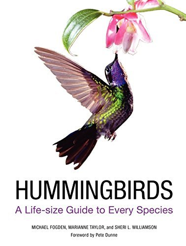 Michael Fogden Hummingbirds A Life Size Guide To Every Species
