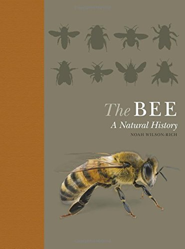 Noah Wilson Rich The Bee A Natural History Quigley