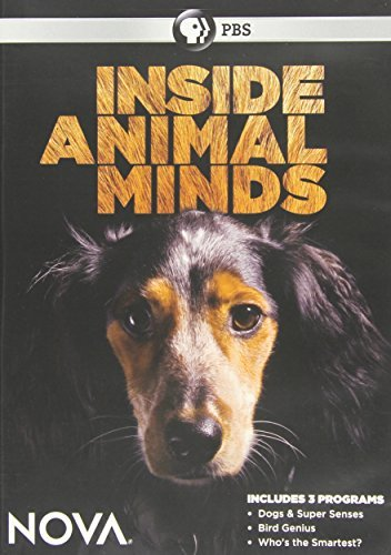 Nova Inside Animal Minds Nova Inside Animal Minds Nr