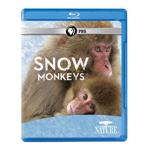 Nature Snow Monkeys Pbs