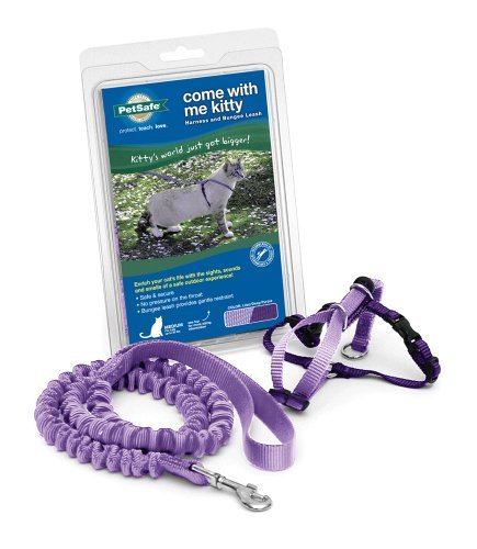 Cwm Kitty Harness Leash Md Llc Petsafe Come With Me Kitty Harness And Bungee Leash Medium Lilac