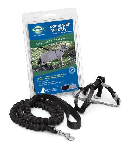 Cwm Kitty Harness Leash Lg Blk Petsafe Come With Me Kitty Harness And Bungee Leash Large Black