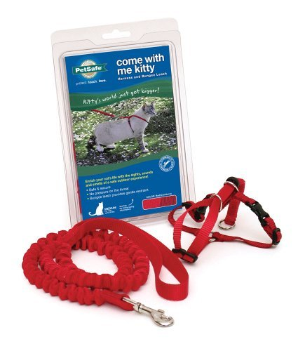 Cwm Kitty Harness Leash Lg Llc Petsafe Come With Me Kitty Harness And Bungee Leash Large Lilac