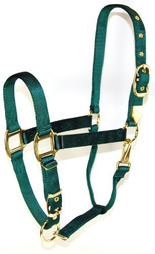 Equ Chin Halter Nylon Hu Yrl Hamilton 1 Inch Nylon Halter With Adjustable Chin Dark Green Yearling Size (300 500 Lbs.)