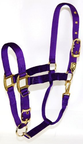 Equ Chin Halter Nylon Purpl Av Hamilton 1 Inch Nylon Halter With Adjustable Chin Purple Average Size (800 1100 Lbs.)