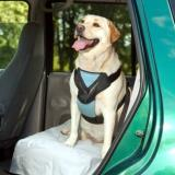 Bergan Dog Auto Harness Lg Bergan Dog Auto Harness With Tether Large