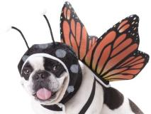 Cali Butterfly Costume Small Animal Planet Pet20101 Butterfly Dog Costume Small