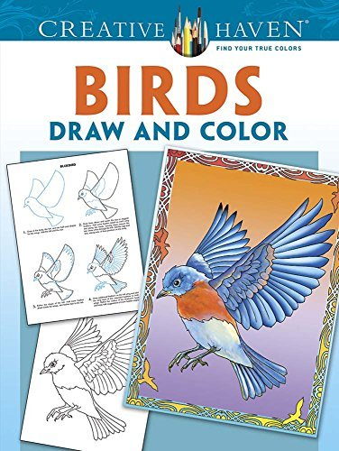 Marty Noble Creative Haven Birds Draw And Color